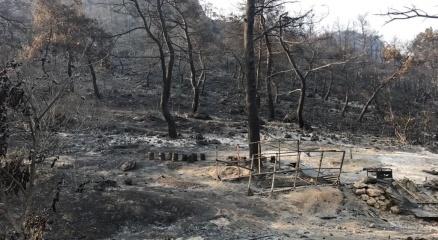 İzmir'deki Yangının Bilançosu Belli Oldu