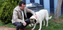 Sokak hayvanlarının imdadına Atakum Belediyesi yetişiyor