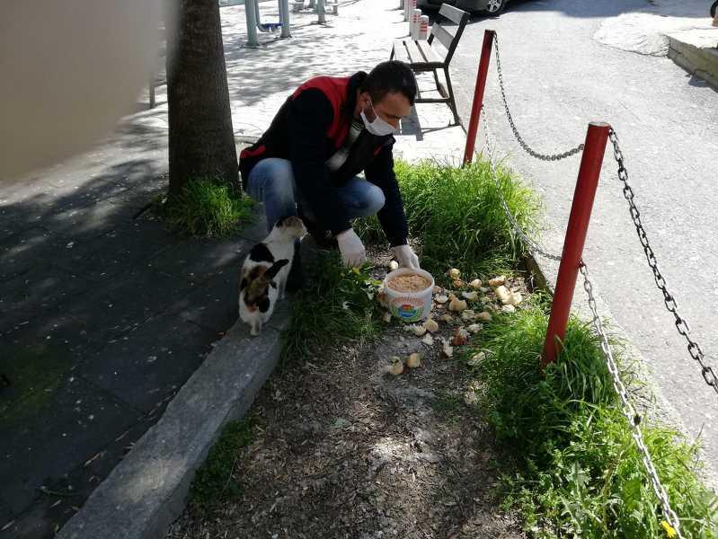 İlkadım Belediyesi sokak hayvanlarına yaşam desteği oluyor