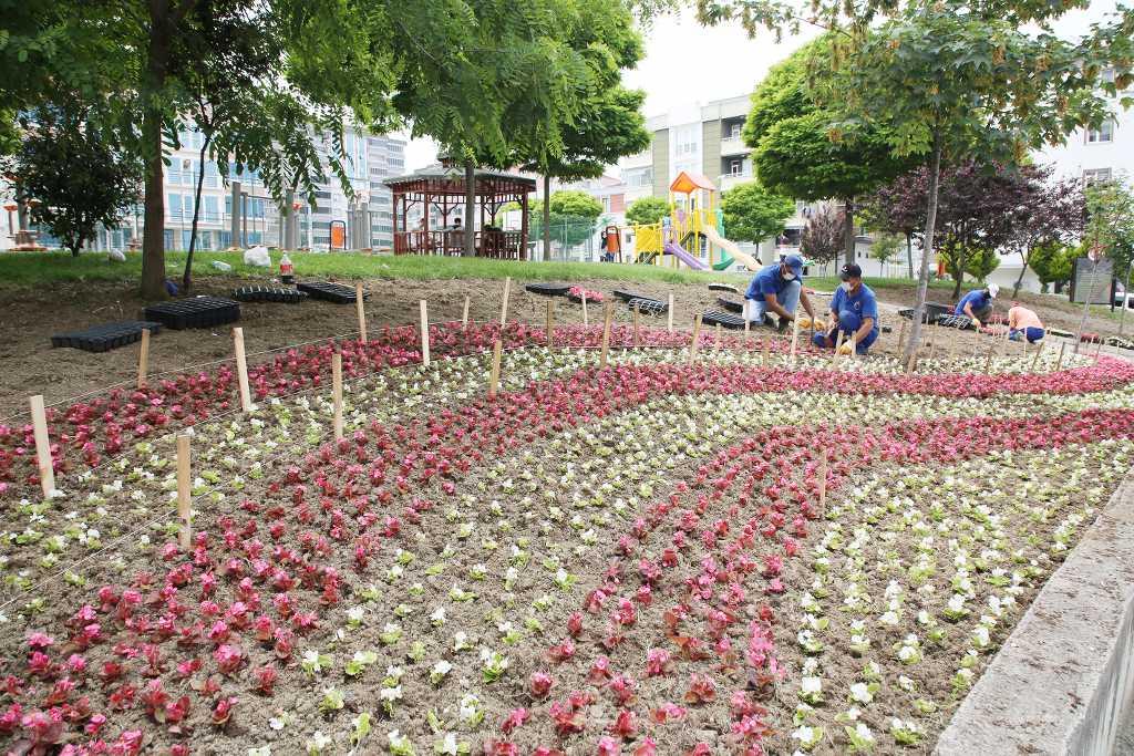 Atakum Belediyesi  30 bin çiçeği toprakla buluşturdu